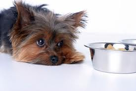 Treating appetite loss with herbs in dogs, natural dog diet, feeding dogs raw bones, natural remedies for dog eating faceas