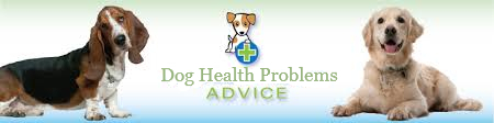 Dog Health Advice