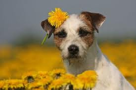 herbs for dog illnesses,alternative medicine for dogs,